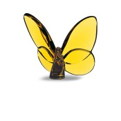 Lucky Butterfly, Amber